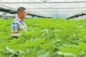 红河州实施产业园区联动发展 推进农业转型升级