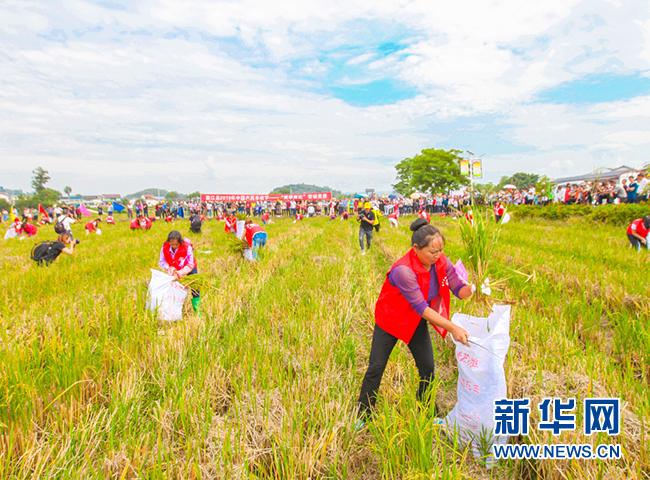今年丰收节重庆将在6个区县举办同庆丰收重点活动