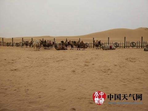 内蒙古植树造林正当时 沙漠移动趋缓