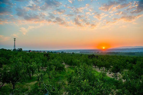 【第三批中国重要农业文化遗产名单】河南灵宝川塬古枣林