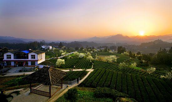 第三批中国重要农业文化遗产名单:湖北恩施玉露茶文化系统