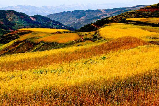 第三批中国重要农业文化遗产名单:四川美姑苦荞栽培系统