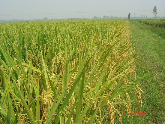 第三批中国重要农业文化遗产名单:安徽寿县芍陂(安丰塘)及灌区农业系统