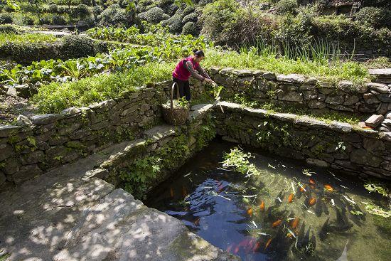 第三批中国重要农业文化遗产名单:安徽休宁山泉流水养鱼系统