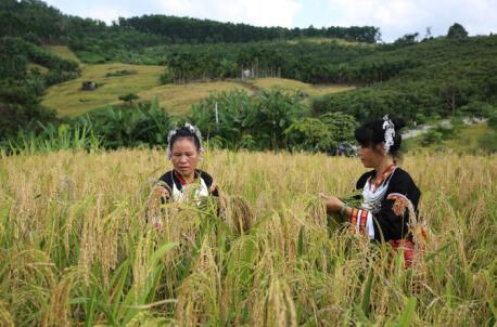 第四批中国重要农业文化遗产名单:海南琼中山兰稻作文化系统