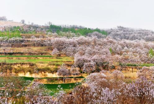 第四批中国重要农业文化遗产名单:河南新安传统樱桃种植系统