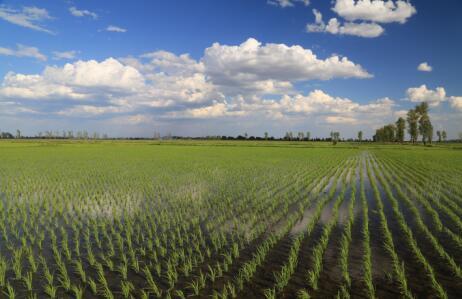 第四批中国重要农业文化遗产名单:吉林九台五官屯贡米栽培系统