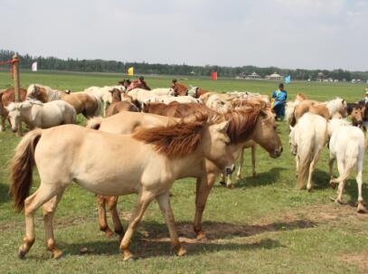 第四批中国重要农业文化遗产名单:内蒙古伊金霍洛农牧生产系统